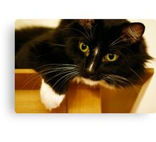 Jasper White Toes Canvas Print