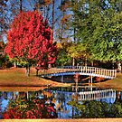 The Little White Bridge Reflection by Kathy Baccari