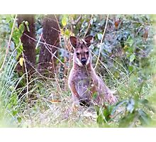 wallaby trail Photographic Print
