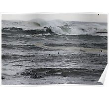 Tasmania waves and birds Poster