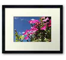 Flowers red petunias close to Framed Print