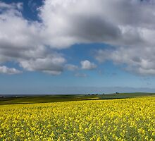 Canola and Clouds by Monika Bauer