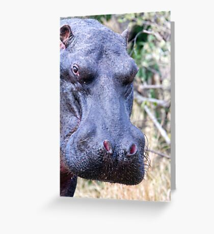 The Hippo Glance Greeting Card