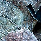 Winter Frost by Joanne Piechota