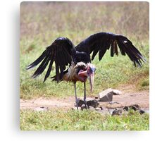 Marabou Stork Just Landing Canvas Print