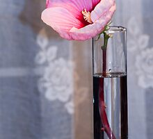 A Cup of Flower by Sherry Hallemeier