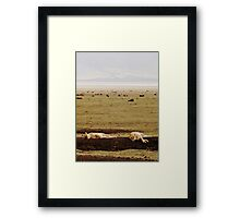 Queens Need Their Beauty Sleep ( Lionesses Napping ) Framed Print