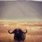 Horns Above, Ears Below ( African Buffalo ) by emiliewho