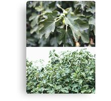 figtree diptych Canvas Print