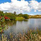 A small dune lake  by Adri  Padmos