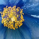 Three flowers: Blue - Reflecting the sun in the sky, petals of rain mourn forgotten memories by Jan Szafranski