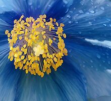 Three flowers: Blue - Reflecting the sun in the sky, petals of rain mourn forgotten memories by Jan Szafranski