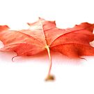 Autumnal Colours by PinkK