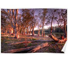 River Murray Sunset III - Renmark, South Australia Poster