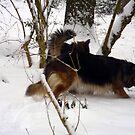 German Shepherd for calender 2013 e by Heidi Mooney-Hill