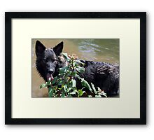 Cool off on a hot day  Framed Print