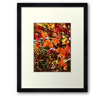 I know that time grows old, can't stop the seasons..Time is gone before it's begun and as the end draws near...The story's over before it's begun...Fall is here and it will be gone too soon Framed Print