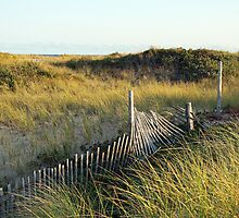 The Dunes - Provincetown Massachusetts by Debbie Pinard