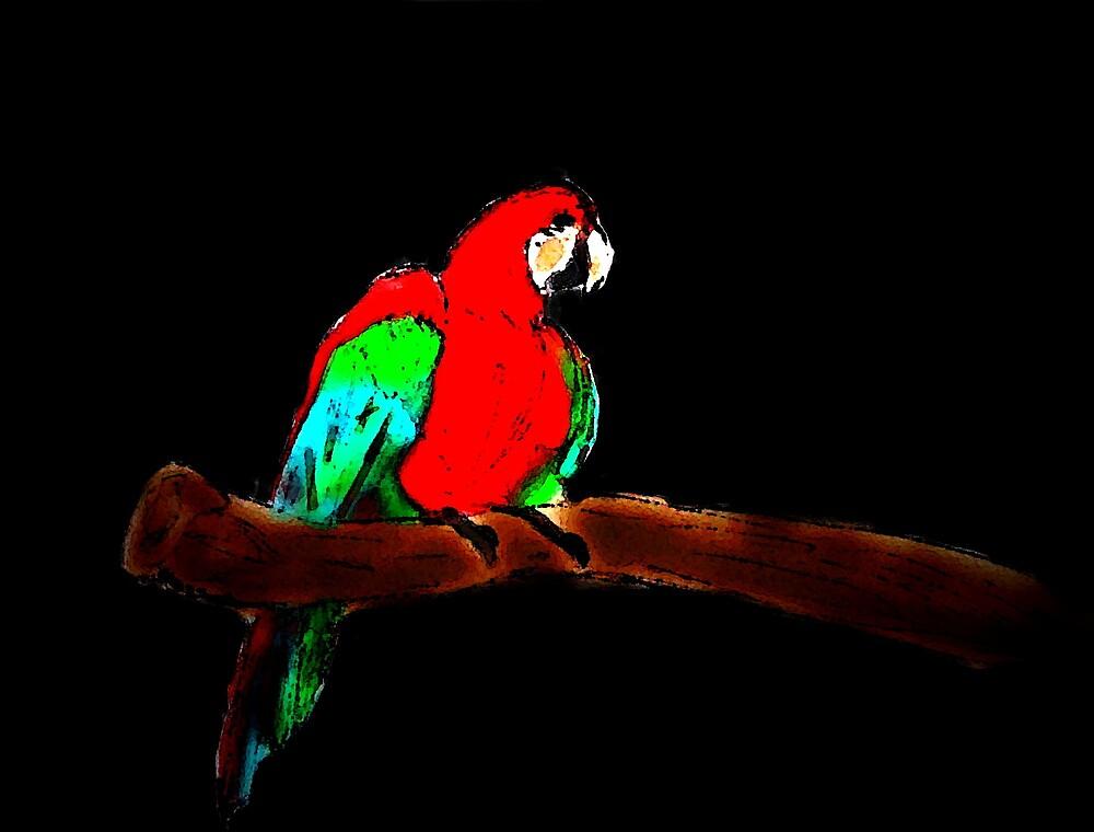 Macaw  by Semmaster