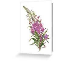 Willow-herb Greeting Card
