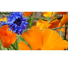 Blue and Orange Summer  Photographic Print
