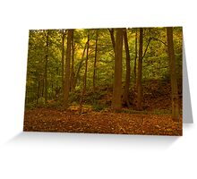 The Forest Of Jones Road Falls © Greeting Card
