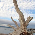 Beached Roots by Linda Dilbeck