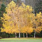 Golden Leaves by Linda Dilbeck