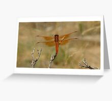 Flame Skimmer Greeting Card