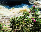 Wild Roses along Trout river Rapids by Yukondick