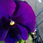 Purple Pansy by JennsTreasures