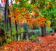 Autumn At The Spirit Of The Woods by Shelly Harris