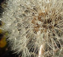 Dandelion Wishes by M. Kuypers