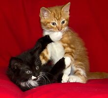 Naughty Kittens! by Theresa Elvin
