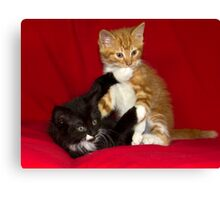 Naughty Kittens! Canvas Print