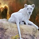 White Lion Cub by Elaine  Manley