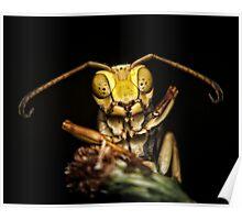 Sleepy Wasp in my Garden Poster