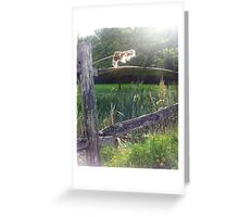 light in the rushes Greeting Card