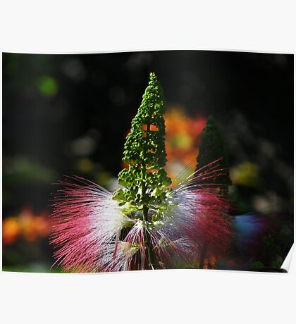 Weeds - Hierbajo Poster