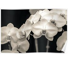 Calming Orchids Poster