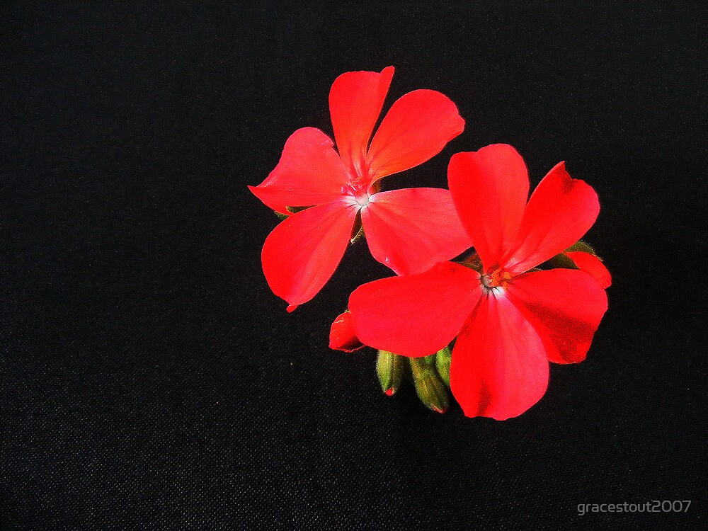 RED FLOWERS by gracestout2007