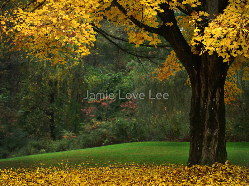 Vermont by Jamie Lee