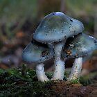 Bluethreeful? by Javimage