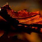 An Early Autumn Morning by Harv Churchill