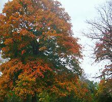 Autumn by Susan S. Kline