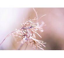 my pink ribbon Photographic Print