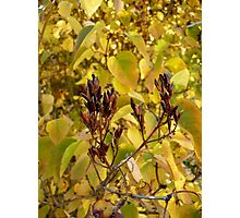 Fall Lilacs Photographic Print