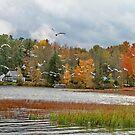 Lake Carmi Autumn 2012 by Deborah  Benoit