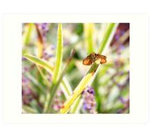 Moth on a Stem Art Print