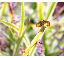 Moth on a Stem Photographic Print
